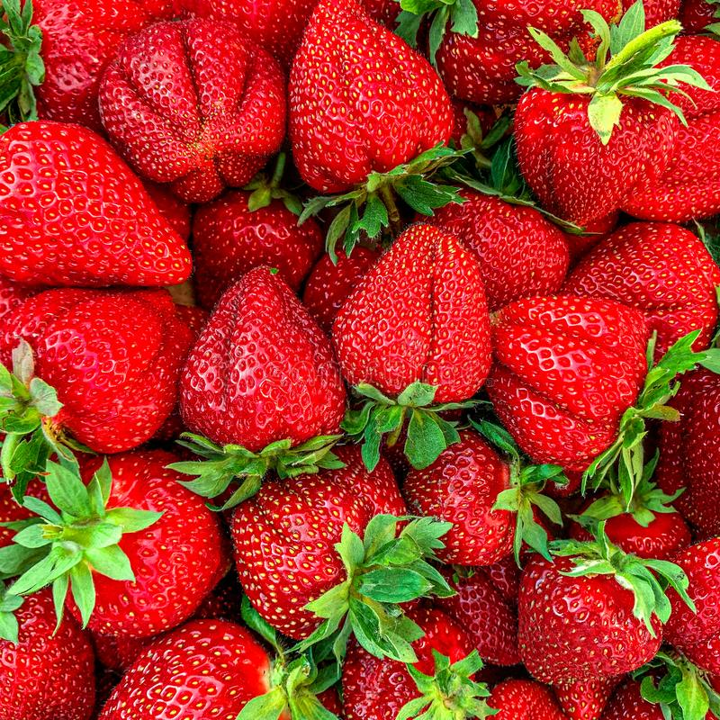 Morango Fundo do verão do fruto As bagas frescas maduras da morango fecham-se acima Vista superior fotos de stock royalty free