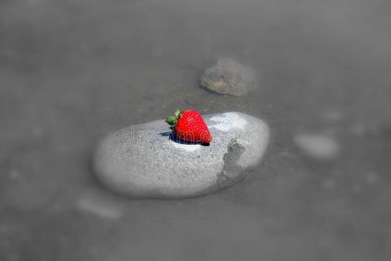 Morango suculenta vermelha que encontra-se em uma pedra e em um fundo cinzento imagens de stock royalty free