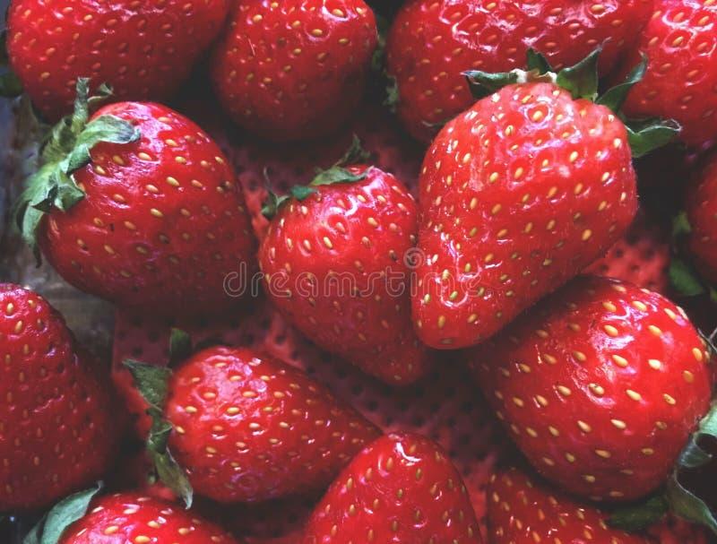 morangos, arranjo do fruto em uma ordem obscura, em um recipiente com um fundo vermelho imagem de stock