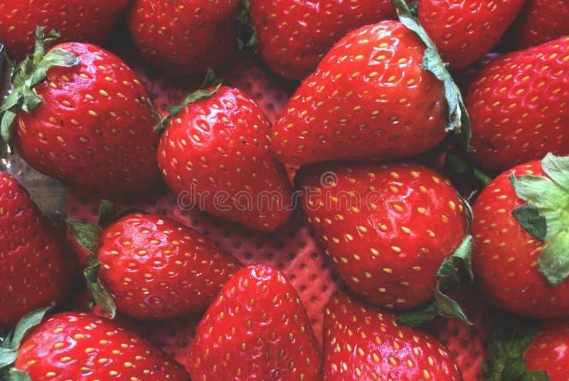 morangos, arranjo do fruto em uma ordem obscura, em um recipiente com um fundo vermelho imagem de stock royalty free