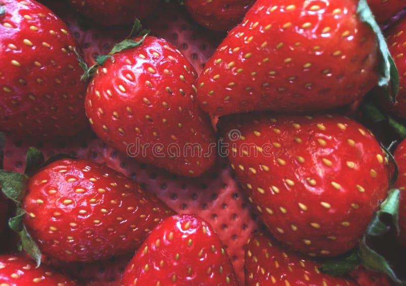 morangos, arranjo do fruto em uma ordem obscura, em um recipiente com um fundo vermelho foto de stock royalty free
