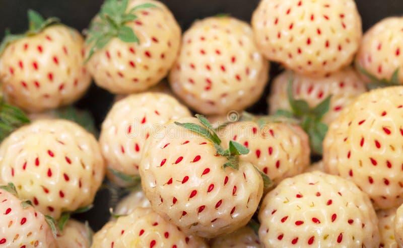 Morangos brancas maduras, pineberries imagens de stock royalty free