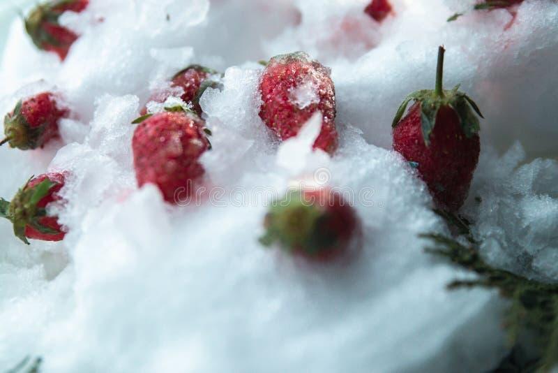 Morangos congeladas na neve e no gelo fotografia de stock