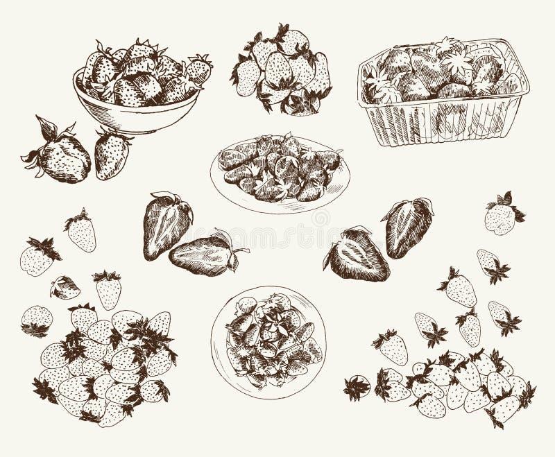Morangos de jardim ilustração royalty free
