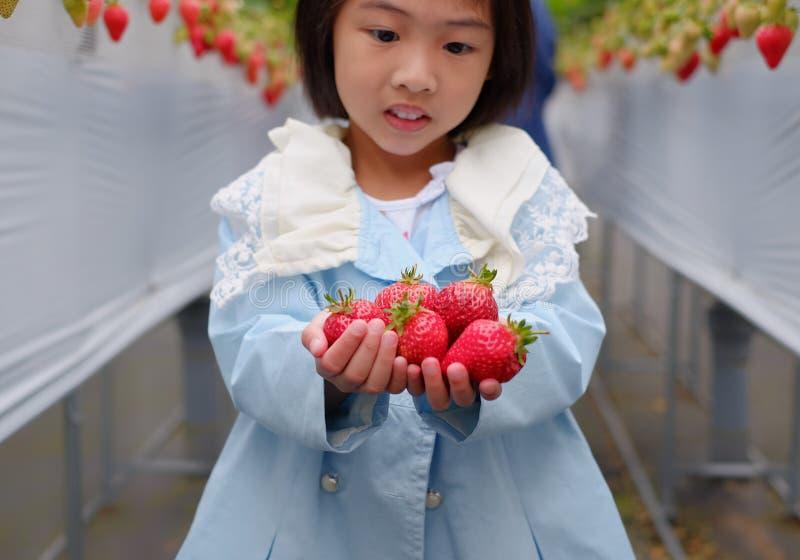 Morangos de uma colheita da menina em uma exploração agrícola em Japão foto de stock royalty free