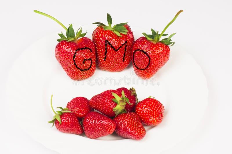 Morangos enormes de GMO fotografia de stock royalty free