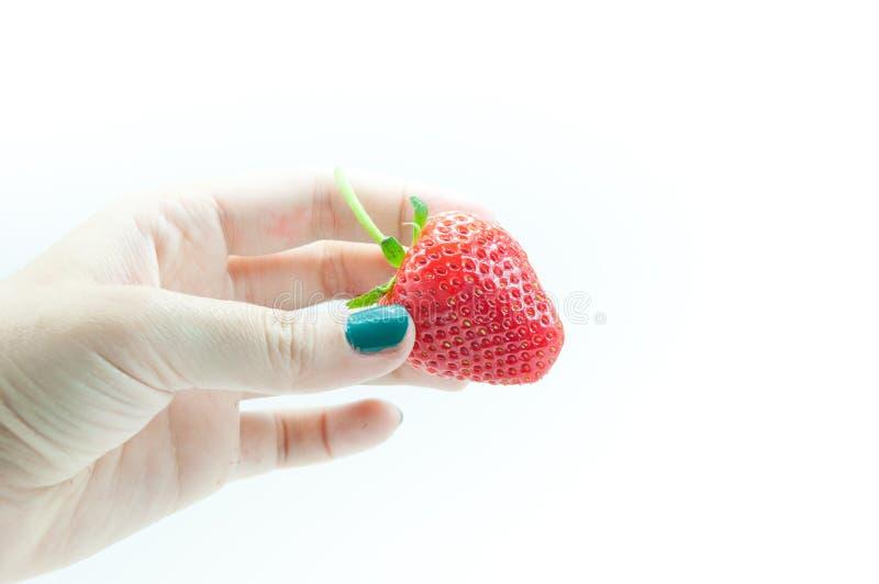Morangos frescas à disposição, uma morango apetitosa na mão de arrelia do ` s da mulher no branco imagens de stock