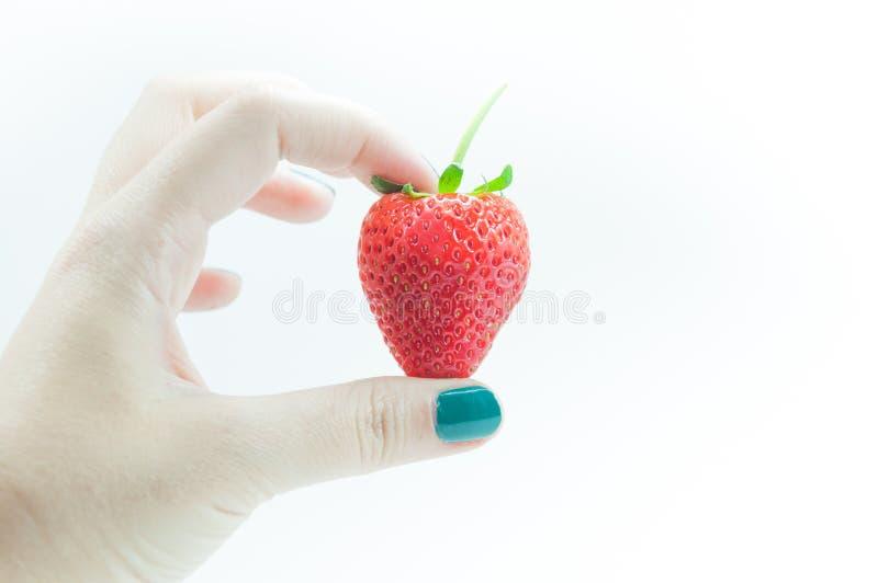 Morangos frescas à disposição, uma morango apetitosa na mão de arrelia do ` s da mulher no branco fotografia de stock