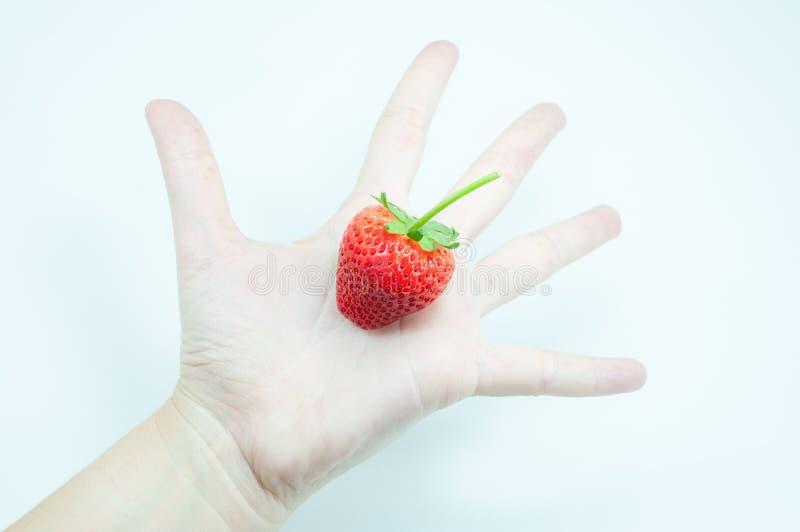 Morangos frescas à disposição, uma morango apetitosa na mão de arrelia do ` s da mulher no branco foto de stock royalty free
