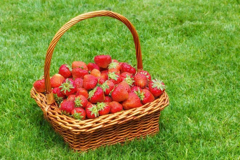 Morangos frescas em uma cesta foto de stock royalty free