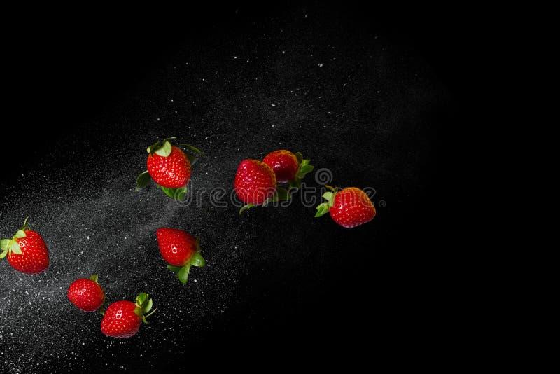 Morangos maduras frescas que voam em um fundo preto Espaço livre imagens de stock