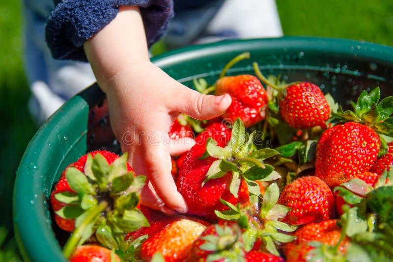 Morangos vermelhas frescas nas mãos do ` s das crianças fotografia de stock royalty free