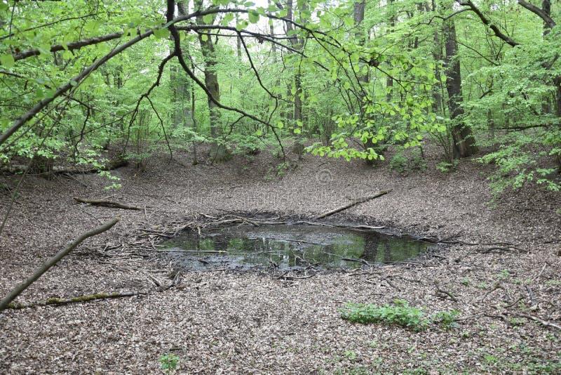 The Morasko meteorite nature reserve, europe stock image