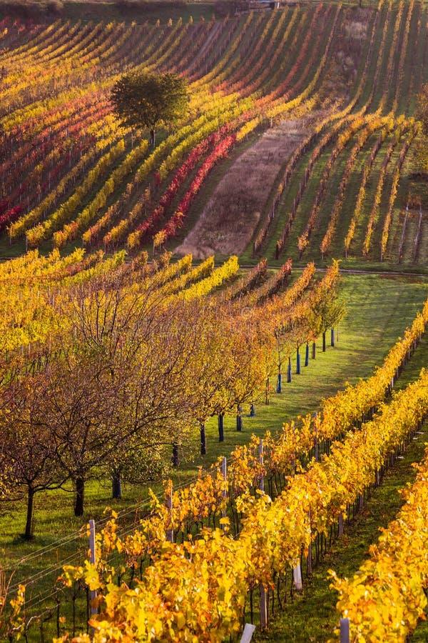 Moravian autumn vineyards. Czech Republic stock image