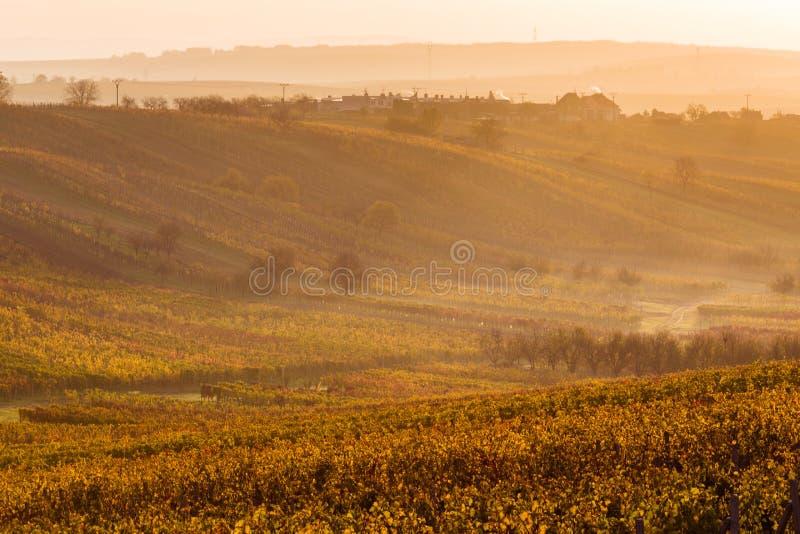 Moravian autumn vineyards. Czech Republic royalty free stock images
