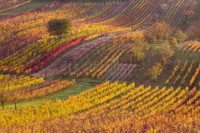 Download Moravian autumn vineyards stock photo. Image of sunset - 107144860