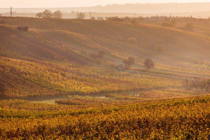 Moravian autumn vineyards. Czech Republic royalty free stock photos