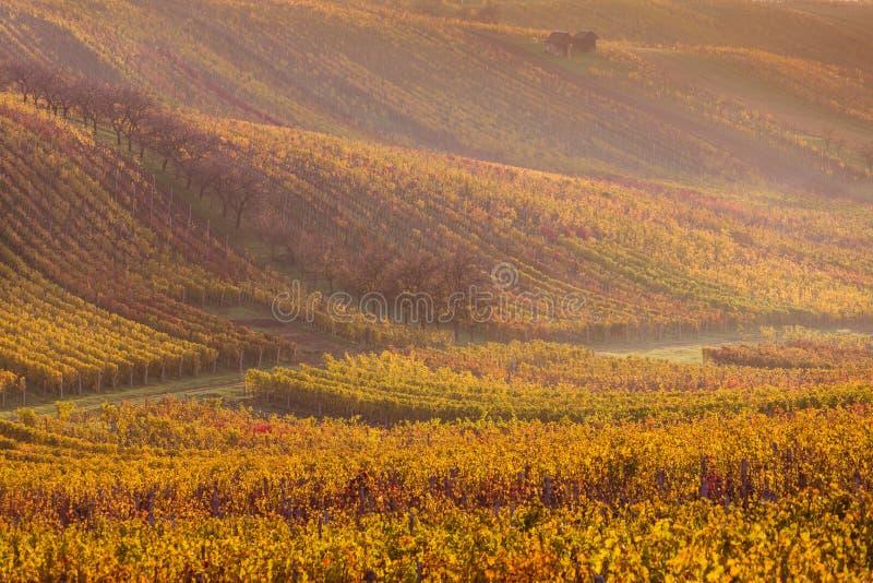 Moravian autumn vineyards. Czech Republic stock photos