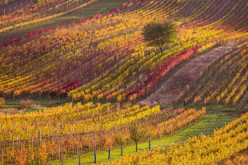 Moravian autumn vineyards. Czech Republic stock images