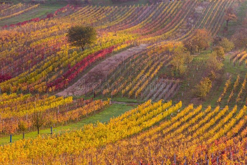 Moravian autumn vineyards. Czech Republic royalty free stock photography