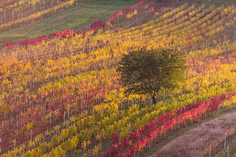 Download Moravian autumn vineyards stock photo. Image of agriculture - 107144966