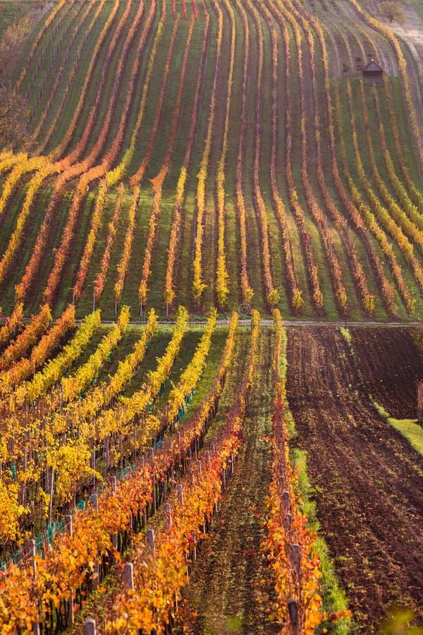 Moravian autumn vineyards. Czech Republic royalty free stock photo