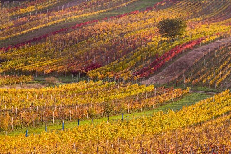 Moravian autumn vineyards. Czech Republic stock photography