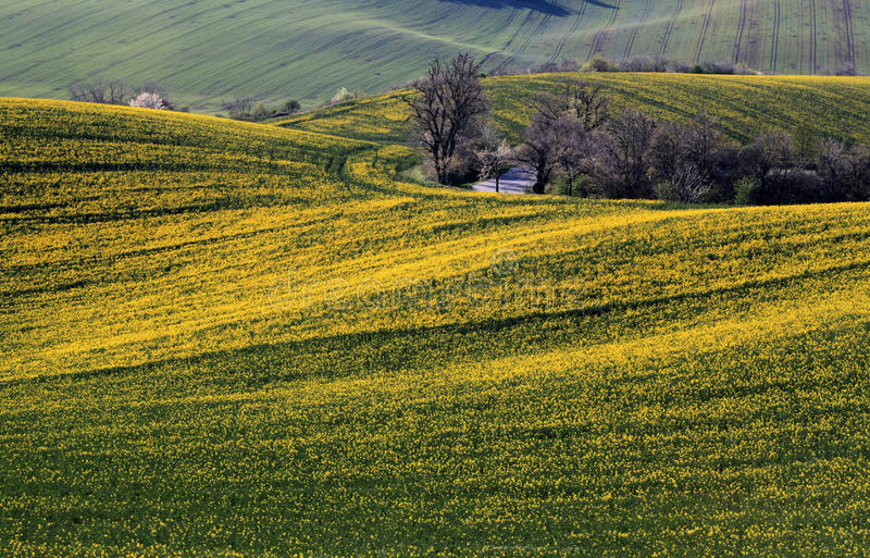 Download Moravian Fields stock photo. Image of brown, moravian - 24880722