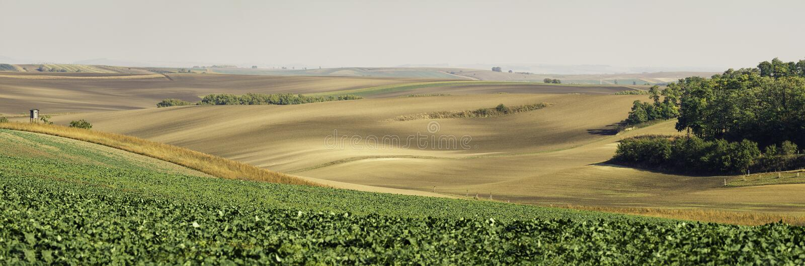 Moravian Fields. Panoramic view of cultivated field in South Moravia, Czechia. Beautiful wavy fields royalty free stock photos