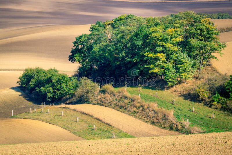 Moravian Fields. Panoramic view of cultivated field in South Moravia, Czechia. Beautiful wavy fields stock photos