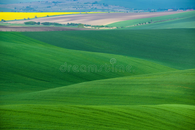 Moravian Green Rolling Landscape With Fields Of Wheat, And Small Village.Natural Seasonal Rural Landscape In Green Color. Moravian Green Rolling Landscape With royalty free stock images