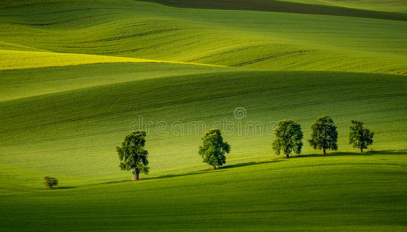 Moravian rolling hills in the summer time with meadow fields and old trees. With beautifully sunlight royalty free stock photo