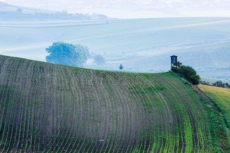 Moravian rullningslandskap med att jaga tornhyddan royaltyfri foto