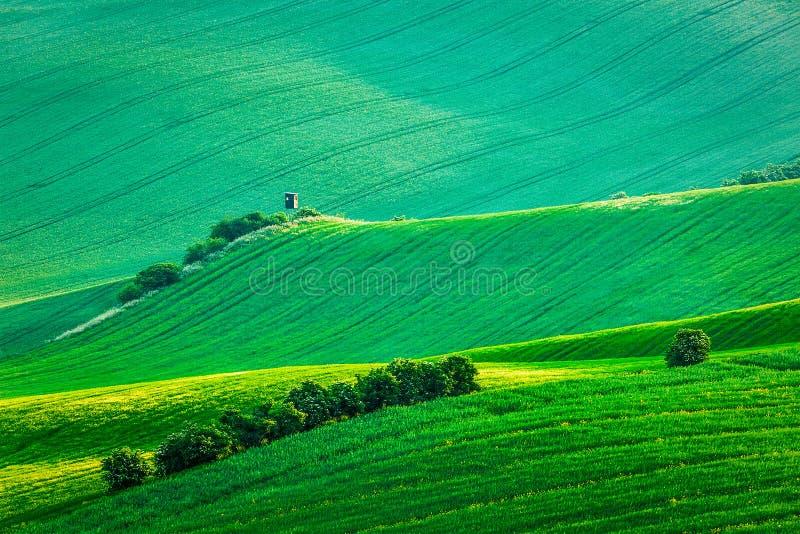 Moravian rullningslandskap med jakttornet arkivfoto