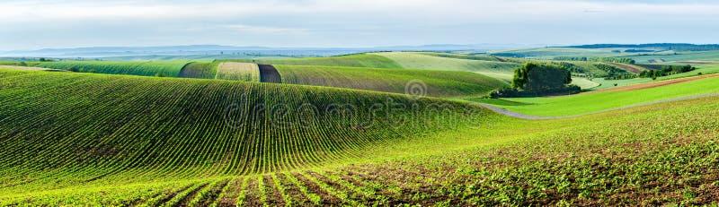 Moravian rullningslandskap med träd fotografering för bildbyråer
