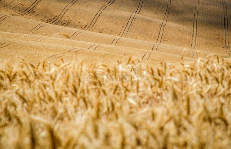 Moravian Toscana Kyjov fotografie stock
