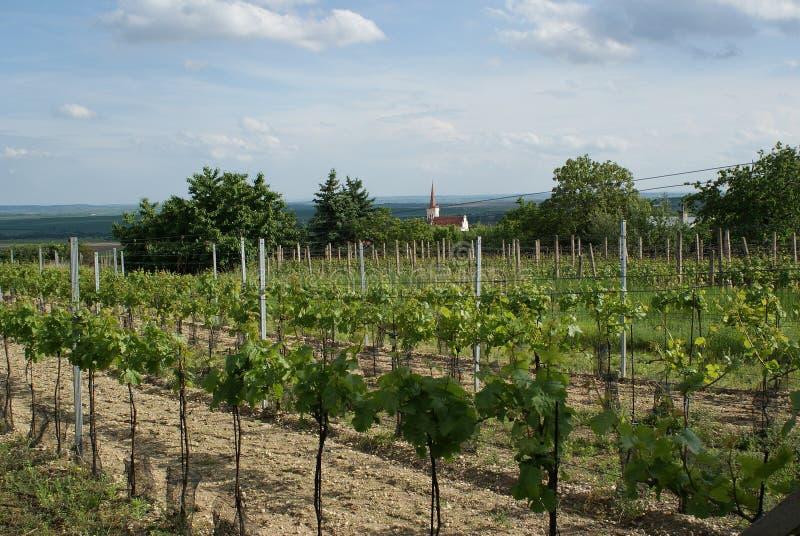 Moravian Wineyard nella sorgente fotografia stock
