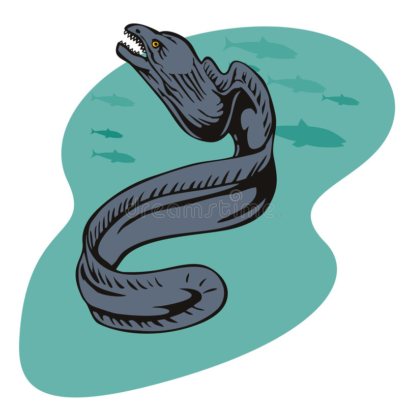 Moray eel. Vector art of a moray eel stock illustration