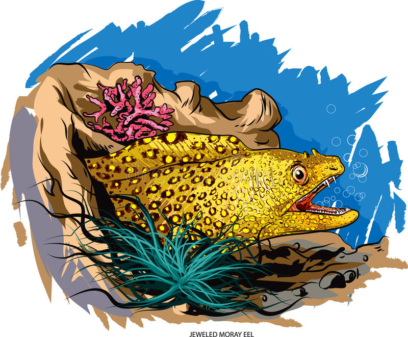 Moray eel. Vector illustration of jeweled moray eel stock illustration
