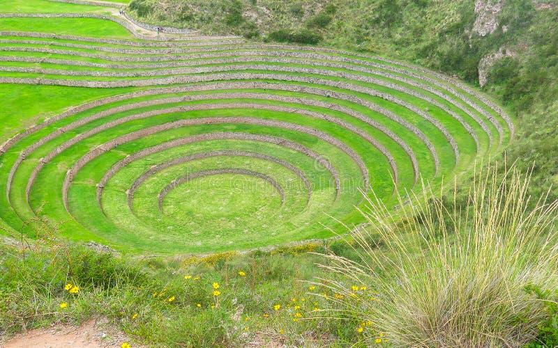 Moray Ruin in Cusco, Peru royalty free stock image