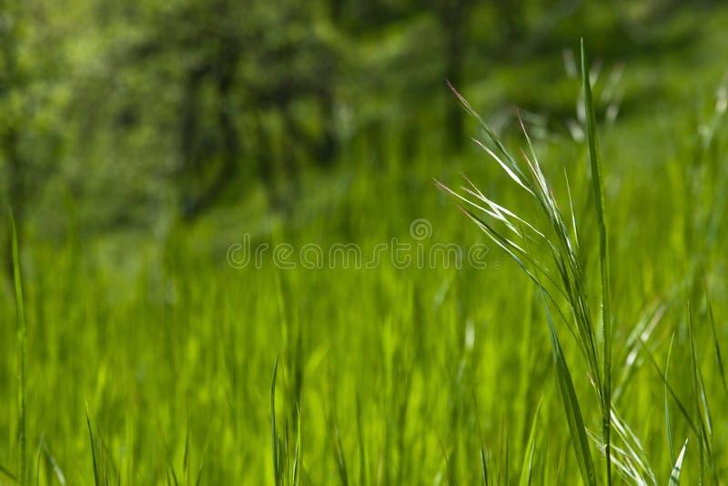 Morceau d'herbe photo libre de droits