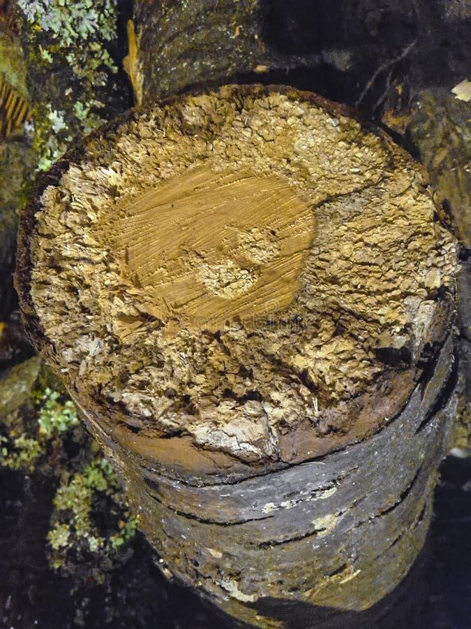 Morceau en bois d'arbre forestier de copeaux en bois avec des zones en angle mort dehors photographie stock libre de droits
