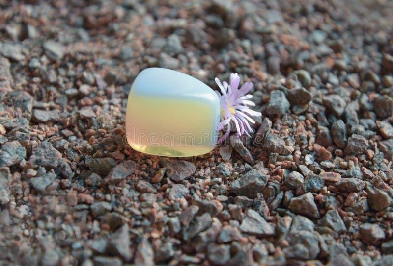 Morceau poli de pierre de la lune avec la fleur de Lithops image libre de droits