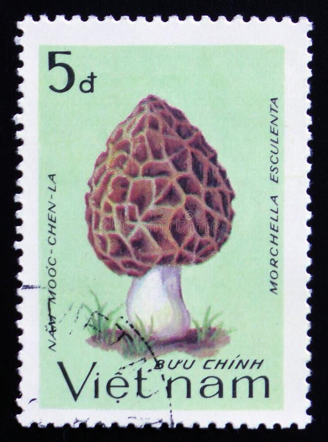 Morchella esculenta, series, circa 1983. MOSCOW, RUSSIA - FEBRUARY 12, 2017: A stamp printed in Vietnam shows Morchella esculenta, series, circa 1983 royalty free stock photography