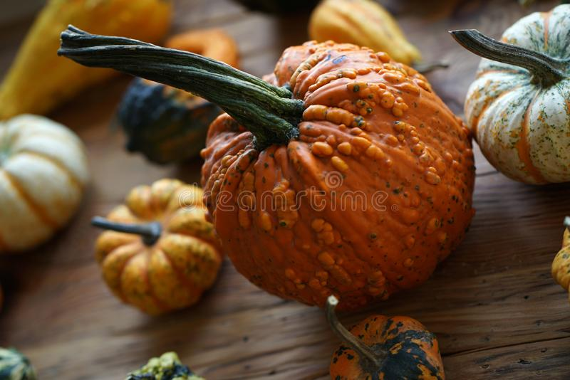 Composition with halloween pumpkins stock photography