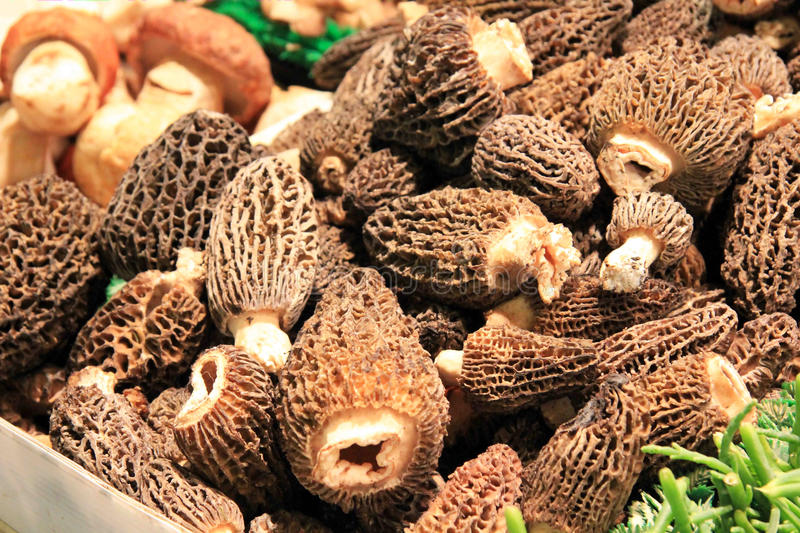 Morel Mushroms. A display filled with large Morel mushrooms at an outdoor market royalty free stock photo