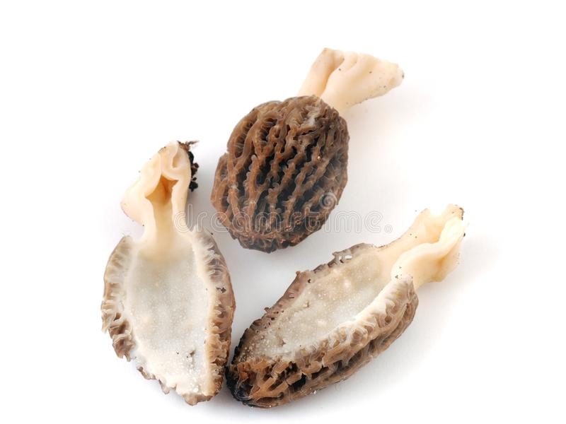 Morel royalty free stock photography