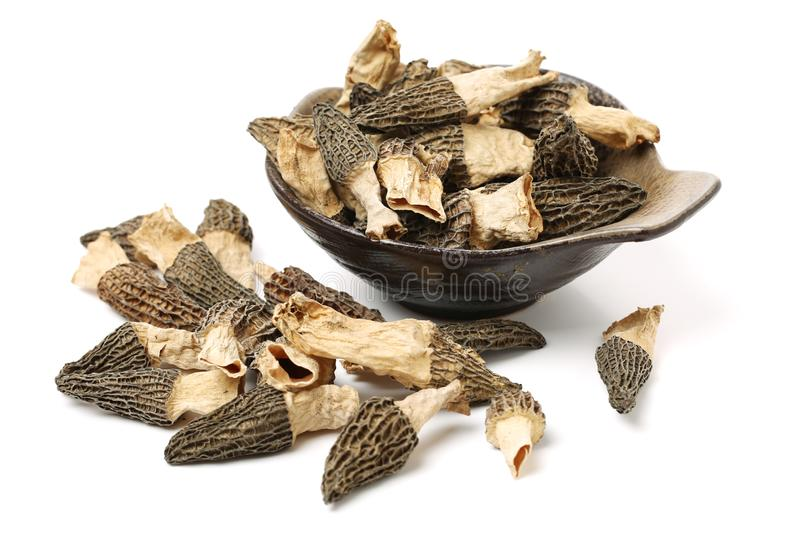 Morel mushrooms. On white background royalty free stock images