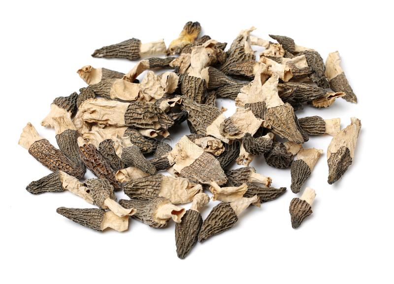 Morel mushrooms. On white background stock images