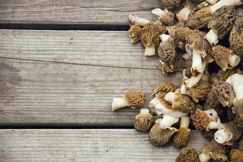 Morel mushrooms on wooden background stock photos